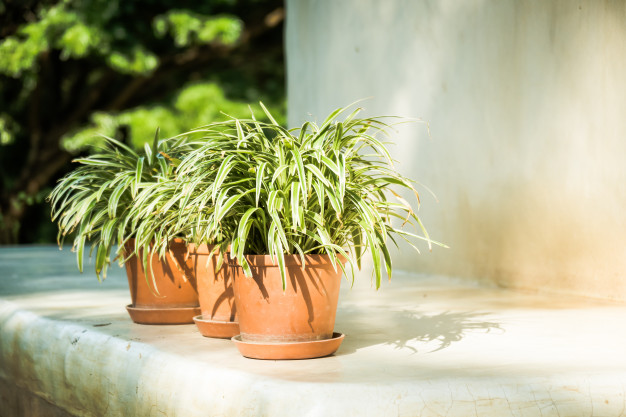 vase-plant-with-outdoor-patio_74190-6946