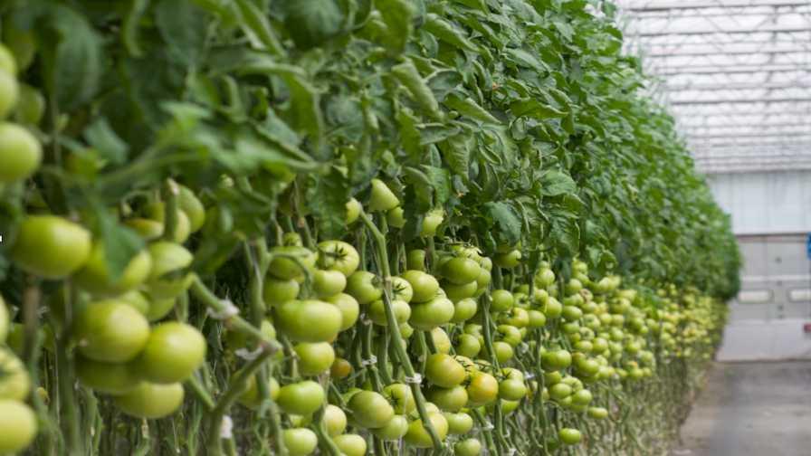 نقش هوش مصنوعی در گلخانه ها