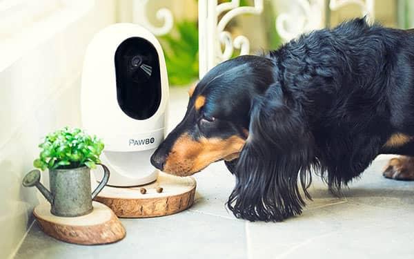 نظارت در خانه هوشمندی که حیوان خانگی دارد